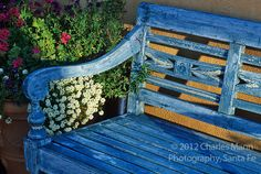 Susan Blevins of Taos, New Mexico, created an elaborate home garden featuring containers, perennial beds, a Japanese themed path and a regional style that reflects the Spanish and pueblo architecture of the area.A faded blue bench adds a focal point.