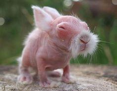 15 animaux sans poils lapin 1   15 animaux sans poils difficilement reconnaissables   wombat rat poil plume photo perroquet ours manchot lap...