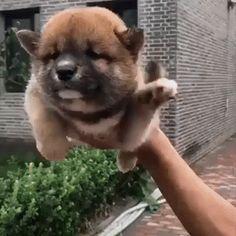 This dog has developed a reflex Cute Little Animals, Cute Funny Animals, Funny Dogs, Cute Cats, Funny Kittens, Cute Animal Videos, Cute Animal Pictures, Cute Videos, Cute Puppy Videos