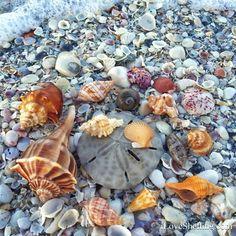 Bowmans Beach shells on Sanibel Island