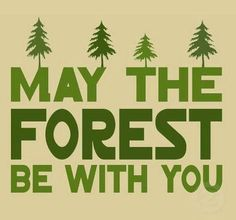May the forest be with you. Happy Tap to see more inspirational quotes, save & love the mother Earth. Citation Nature, Shining Tears, Mother Nature Quotes, All Nature, House Nature, Nature Puns, Green Nature, Nature Study, Human Nature