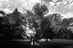 Blenheims Brayshaw Park - lovely tree backdrop