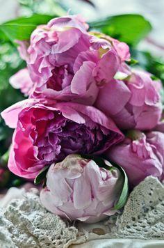 #peonies #flowers #photography