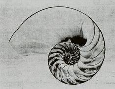 Nautilus_Shell