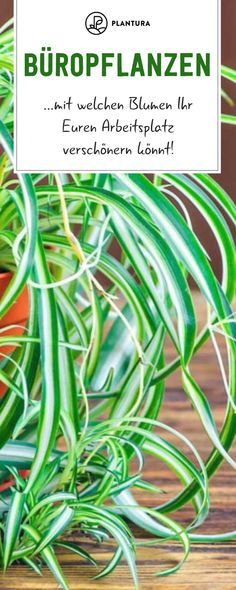 Office plants: 10 easy-care plants for the office # easy-care plants 10 p Easy Care Plants, Office Plants, Garden Hose, Outdoor, Tricks, Ornamental Plants, Garden Plants, Planting For Kids, Outdoors