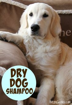 Dry Dog Shampoo - Only 3 ingredients and keeps your dog smelling wonderful between baths! So much better than bathing constantly!