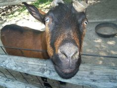Inquiring minds want to know. . .what's happening at the Deanna Rose Children's Farmstead. Opening day April 1. http://www.opkansas.org/things-to-see-and-do/deanna-rose-childrens-farmstead/deanna-rose-special-events/
