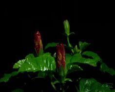 Flower by DiZa-74