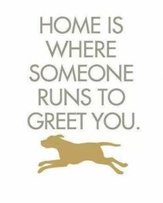 home is where someone runs to greet you:)