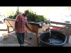 COOL! :-) Social-Media Enabled Aquaponics in West Oakland : TreeHugger…