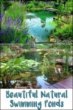 Dreaming of having a natural swimming pond in your backyard? Check out these beautiful inspirations...