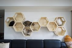 Imgur: The magic of the Internet Cat Wall Shelves, Cat Hotel, Cat Plants, Diy Cat Tree, Dog Furniture, Cat Playground, Cat Room, Crazy Cats, Dog Cat
