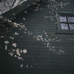 Springtime blossoms reflected in windows  #seekthesimplicity #signsofspring #flashesofdelight