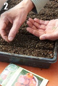 Starting from seed, step 2 How to Start From Seeds   Organic Gardening   www.organicgardening.com