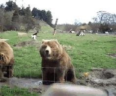 urso (2)