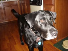 Flash (1998-2011)  He was an awesome pet; mild mannered, loyal, great with the children.  We still miss and love you.  RIP old friend.