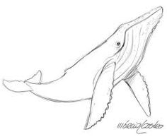 Image result for simple line drawings whale art