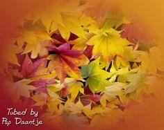 Tubes Herfst Achtergronden (autumn)