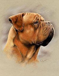 Dog Gallery - Paragon pet portraits