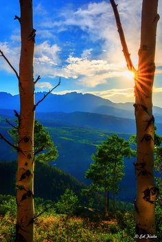 Aspen Aglow, Colorado, United States.