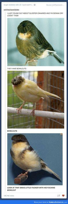 Birds With Bowlcuts Hahahahahahaahaha.
