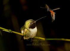 Hummingbird photo by Jamie Felton.