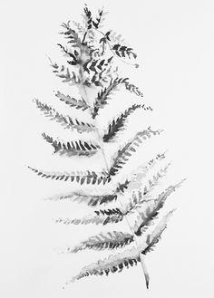 """Obraz na płótnie """"Black fern leaf"""""""