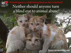 No reasonable, conscientious person would ignore a child being beaten, hit or kicked. Neither should anyone turn a blind eye to animal abuse!