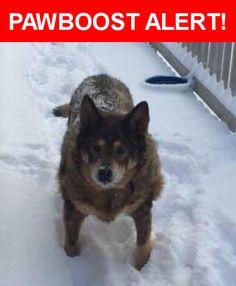 Please spread the word! Myah was last seen in Robbinsville, NC 28771.    Nearest Address: Near Mountain Dr & High Splendor Dr