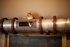Cat Transit System. Correction: ferret transit system @Paige Owens