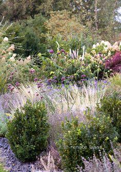 Lavendel Gräser Hortensie Bux Eisenkraut