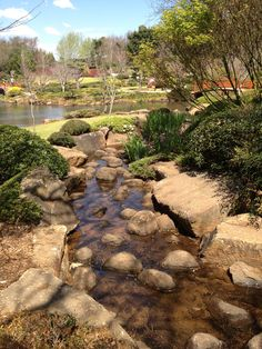The weather is getting warmer. What a great view across the Japanese Gardens  #usqjapanesegardens