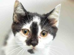Quinn and Paris are two frightened kittens who need some socialization and a good home!