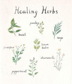 "taryndraws: "" herb friends """