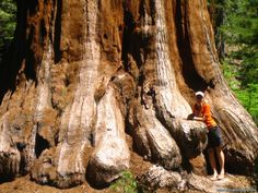As 10 espécies de árvores mais exóticas do mundo