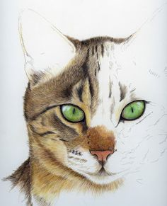 Watercolor Cats | Watercolour Cat Continued