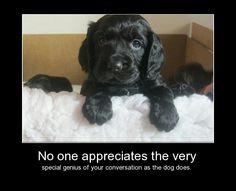 Black Cocker Puppy