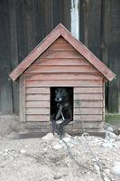 Build a dog house for your extra large dog.