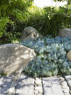 mixture of river rock and railroad wood tracks to make a path through succulents and boulders