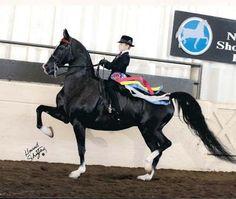 Saddleseat equitation  http://www.johnwhitestables.com