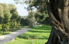 Masseria Il Frantoio - Path along the Olive Trees