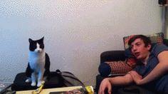 猫とハイタッチ!