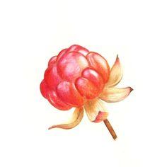 My Art - Illustrations - Drawings - Paintings Watercolor Sketchbook, Watercolor Paintings, Tiny Heart, Art Studies, Future Tattoos, Botanical Art, Love Art, Colored Pencils, Art Inspo
