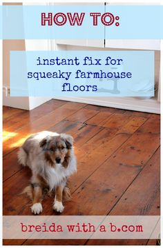 how to fix squeaky harwood floor