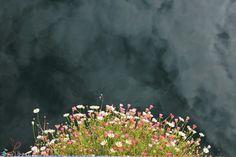 Flores creciendo en vertical con el cielo reflejado en el agua.