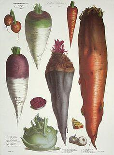 Vilmorin Fruit & Vegetable Prints