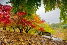 Park bench is a colorful setting - #parkbench #parkbenches #outdoor benches #benches