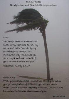The righteous will flourish like a palm tree. Tree Bible Verse, Bible Verse Tattoos, Bible Art, Fox Tattoos, Tree Tattoos, Deer Tattoo, Raven Tattoo, Tattos, Sleeve Tattoos