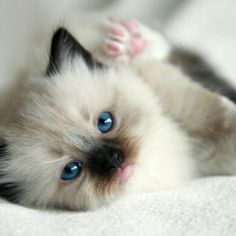 Search result: kitten tags:kitten - page 2 - ViewBug.com