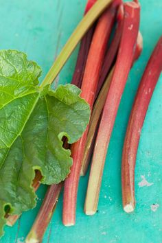 How to grow rhubarb in your garden (city or farm), how to harvest rhubarb and some great rhubarb recipes ideas - and what rhubarb is exactly!